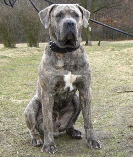 Best Dogs For Shutzhund